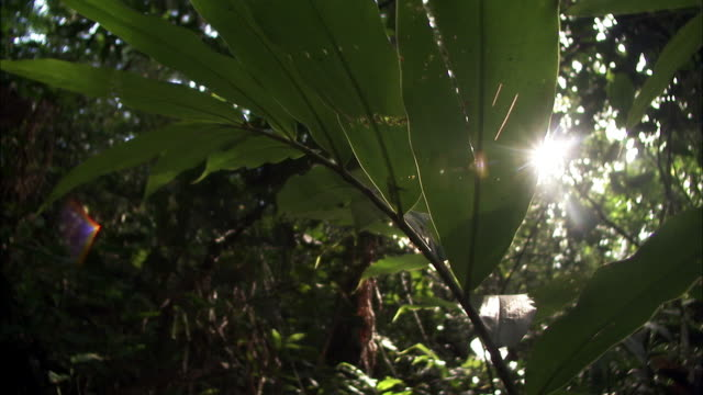 sun shines through undergrowth in forest, kyambura gorge, uganda - 熱帯の低木点の映像素材/bロール