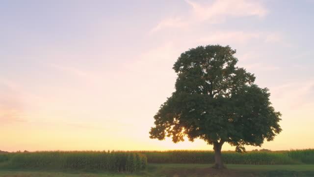 ms sun shining behind single tree in rural field,slovenia - single tree stock videos & royalty-free footage
