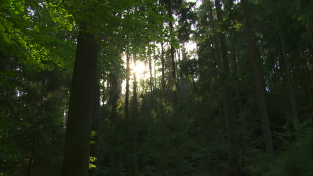 hd sun shining into forest (time lapse) - idylle stock videos & royalty-free footage