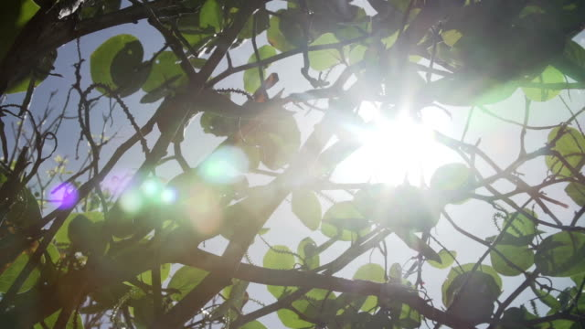 sun shining leaves on branch - 木漏れ日点の映像素材/bロール