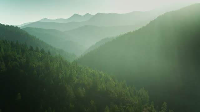 sun shining on dense forest in klamath mountains, northern california - aerial view - cascade range stock videos & royalty-free footage