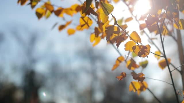 秋から輝く太陽の葉クモの巣風に感動 - 昆虫点の映像素材/bロール