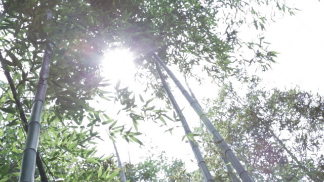 sun shining through bamboo tree at jungnogwon bamboo garden / damyang-gun, jeollanam-do, south korea - damyang stock videos & royalty-free footage