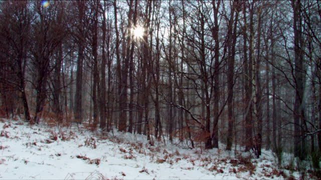 vídeos de stock, filmes e b-roll de sun shining through bare forest trees, snow and withered foliage on forest floor - chuva congelada