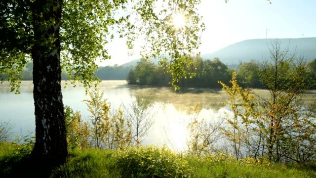 Sun shining through birch tree on the lake shore in the morning, Freudenberg, Baden-Wurttemberg, Germany