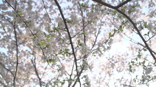 花の枝を通して輝く太陽 - 政治行動委員会点の映像素材/bロール