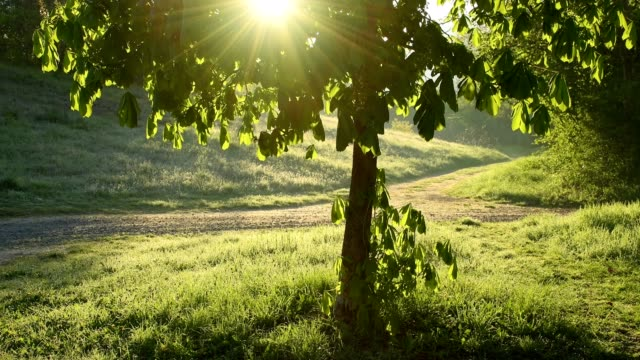 Sun shining through chestnut tree, Freudenberg, Baden-Wurttemberg, Germany