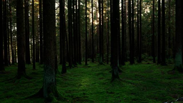 sonne scheint durch nadelwald - moos stock-videos und b-roll-filmmaterial