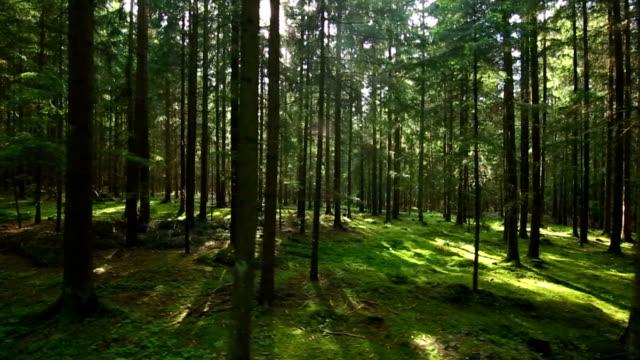 Sun Shining Through Forest Tracking Shot
