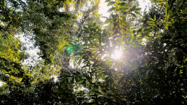 sun shining through forest - leaf stock videos & royalty-free footage