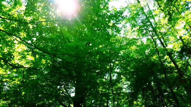 sun shining through green forest tracking shot - zona arborea video stock e b–roll