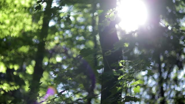 Meio tiro de Ângulo Baixo panorâmica do sol brilhar através de folhas Verdes em floresta