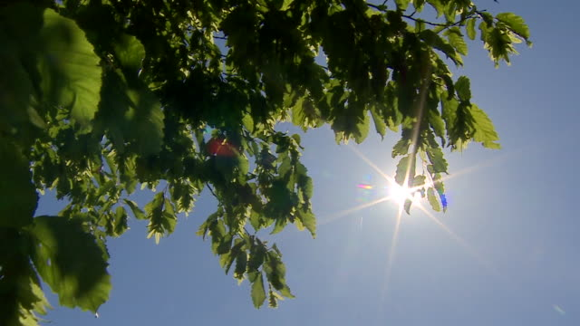 sun shining through leaves on bright sunny day london - sky only stock videos & royalty-free footage