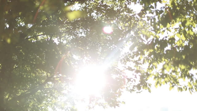 sun shining through leaves - copertura di alberi video stock e b–roll