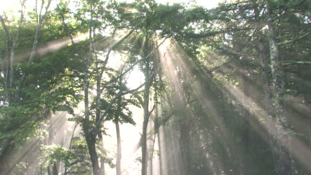 Sun shining through misty forest