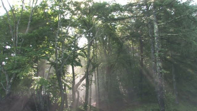 sun shining through misty forest - präfektur fukuoka stock-videos und b-roll-filmmaterial