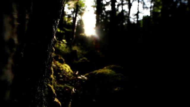 Sonne scheint durch Mystic Forest