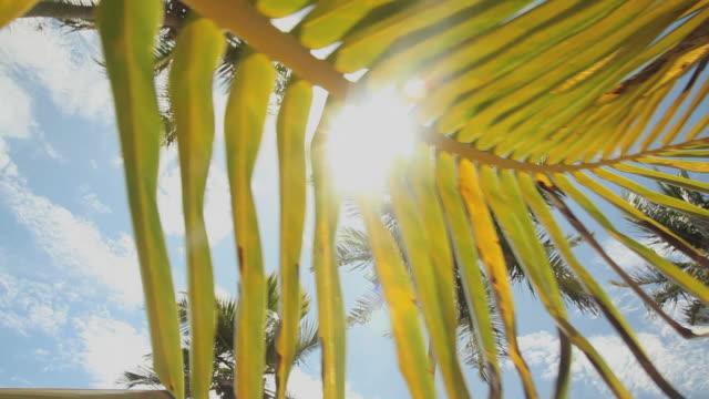 CU Sun shining through palm leaf / Nassau, New Providence, Bahamas