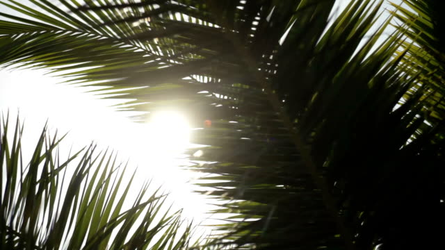 vídeos de stock e filmes b-roll de sun shining through palm leaves - palmeira