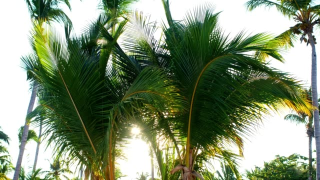 sun shining through palm trees - tropical tree stock videos & royalty-free footage