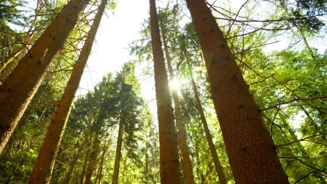 vídeos de stock, filmes e b-roll de sun que brilha através da floresta da mola - floresta da bavária