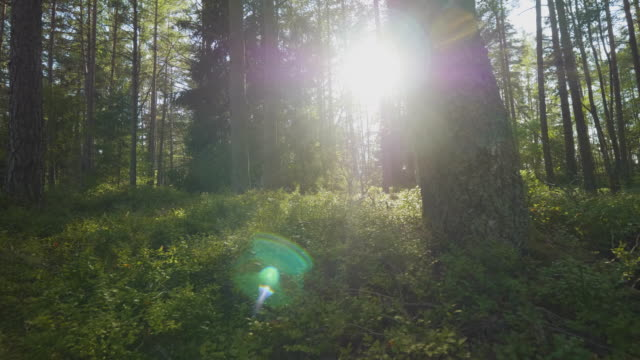 sun shining through the trees in the forest - sweden stock videos & royalty-free footage