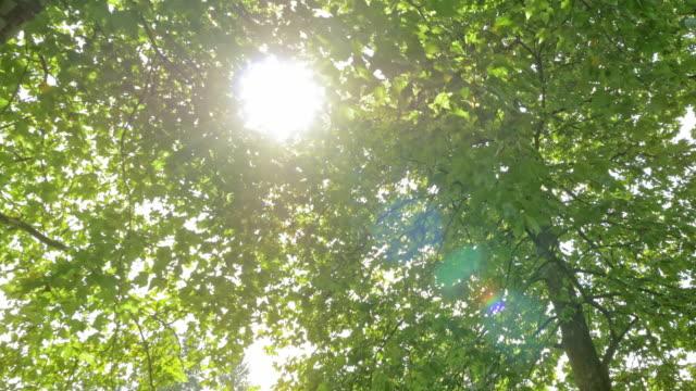 vídeos de stock e filmes b-roll de aerial sun shining through the trees - copa da árvore