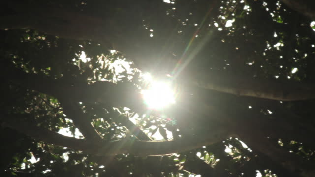 sun shining through tree canopy, pollen drifting - copertura di alberi video stock e b–roll