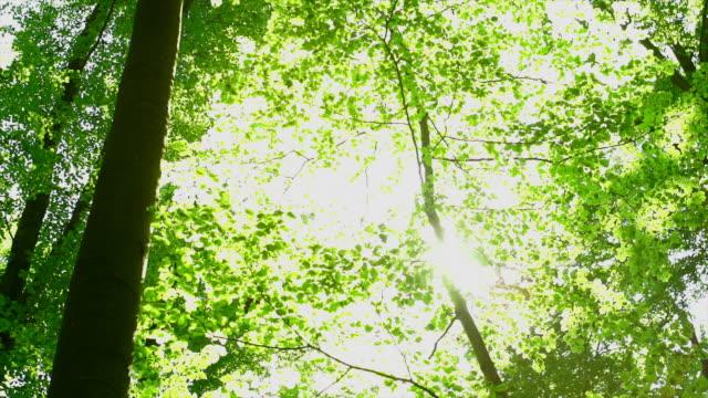 HD 太陽輝くからツリートップ(パン)(4 :2 :2 @100 Mb /s )