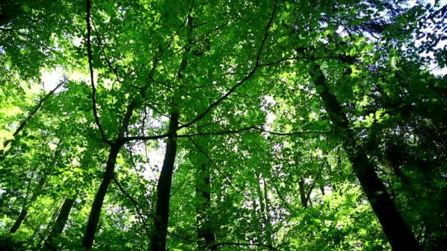 PAN Sun Shining Through Tree Tops
