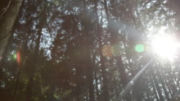SLOW MOTION: Sun shining through trees deep in the forest