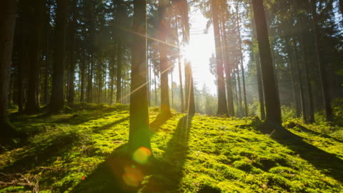 sun shining through trees in forest, steadycam - green colour stock videos & royalty-free footage