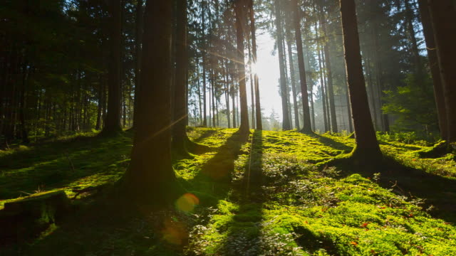 sun shining through trees in forest, steadycam - sonnenlicht stock-videos und b-roll-filmmaterial