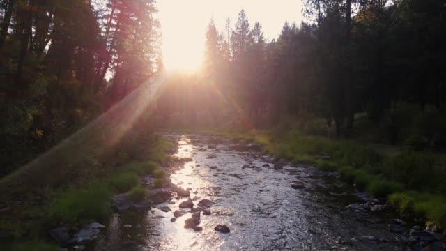sun shining through trees on bridge creek, oregon - drone shot - umatilla stock videos and b-roll footage