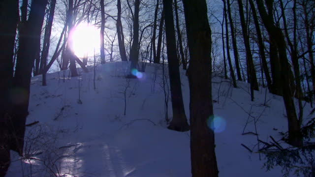 Sun shining through trees on snowy hill
