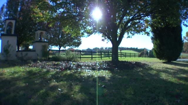 太陽輝く~木 - 葉状体点の映像素材/bロール
