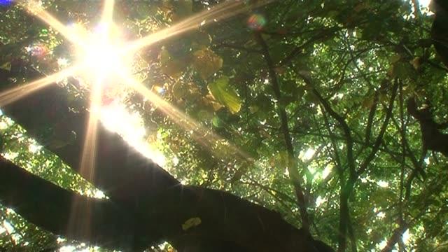 vidéos et rushes de sun shining through treetop - brindille