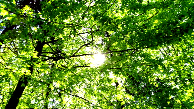 ZOOM Sun Shining Through Treetop