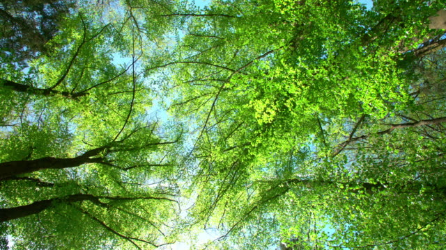 sun shining through treetops - copertura di alberi video stock e b–roll