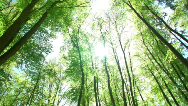 sun shining through treetops - directly below stock videos & royalty-free footage