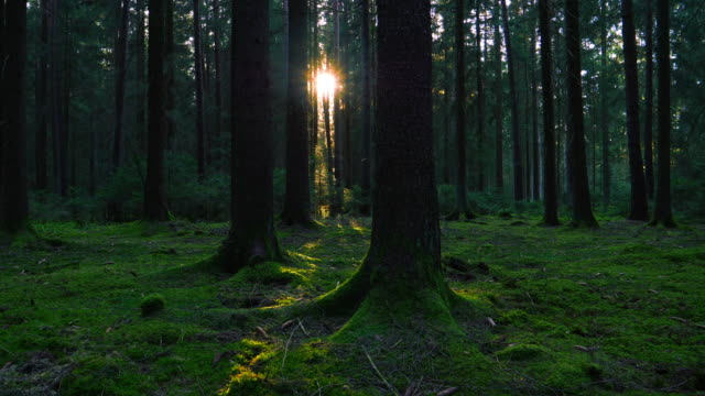 sun shining trough green forest tracking shot - moss stock videos & royalty-free footage