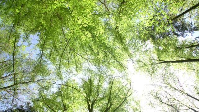 sun shiningthrough treetops - treetop stock videos & royalty-free footage