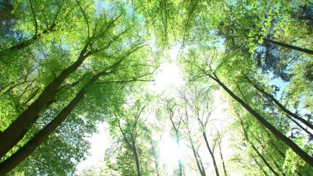 sun shiningthrough treetops - tree canopy stock videos & royalty-free footage