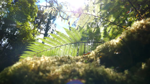 sun shrine through leaf - fern stock videos & royalty-free footage