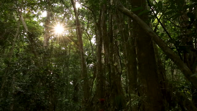 Sun star peaking through rainforest canopy down into understory