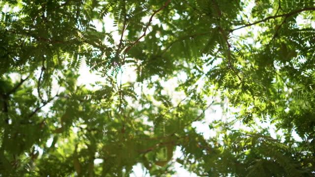 sun streaming through leaves and branches - non urban scene stock videos & royalty-free footage