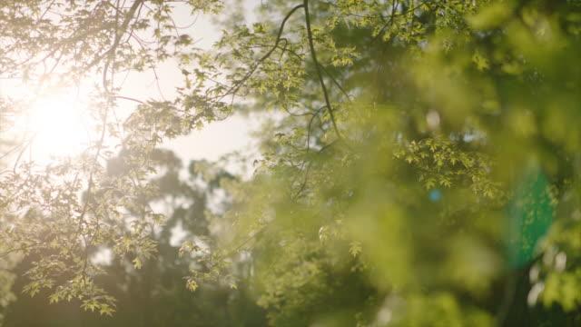 オークの木の葉を流れる太陽 - 樹冠点の映像素材/bロール