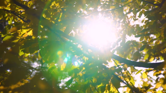 sun through autumn leaves - dolly shot stock videos & royalty-free footage