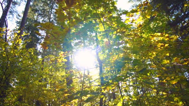 vídeos y material grabado en eventos de stock de sol a través de hojas otoñales - poland