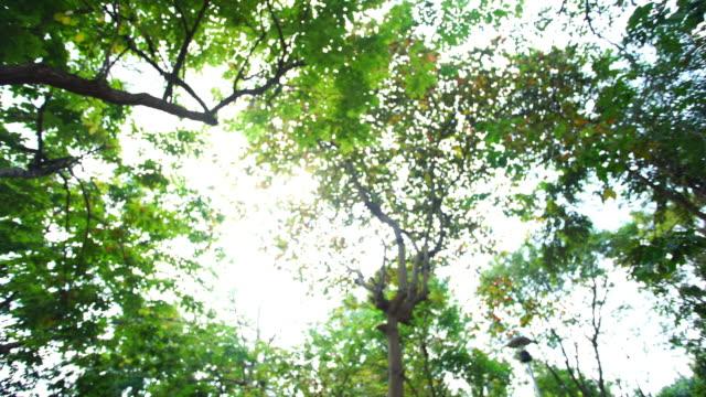 vídeos de stock, filmes e b-roll de sol a floresta - céu fenômeno natural